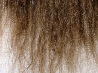 Des cheveux très abimés