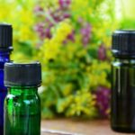 Découvrez les nombreux bienfaits de l'huile de ravintsara