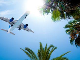 Avion et palmiers