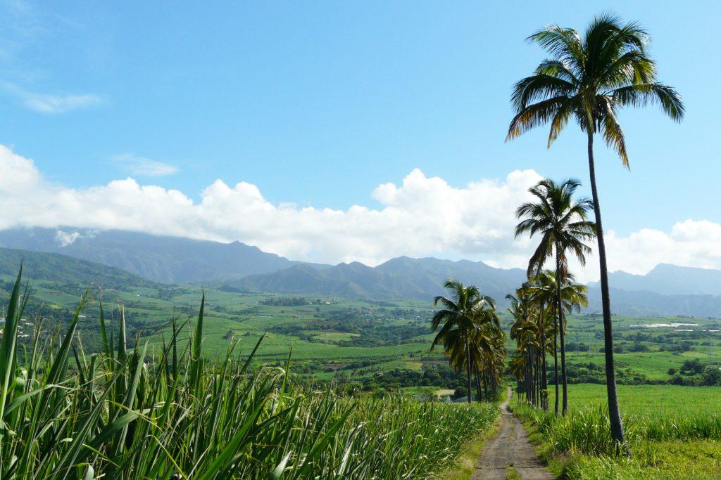 Comment organiser un super voyage à la Réunion ?